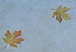 Tile detail -- maple leaves